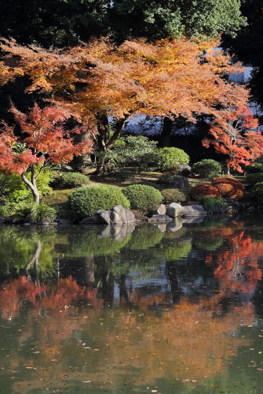 曇り空の紅葉と日射しの紅葉_b0190710_2238964.jpg