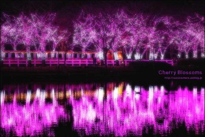 12月の桜_f0100215_00295999.jpg
