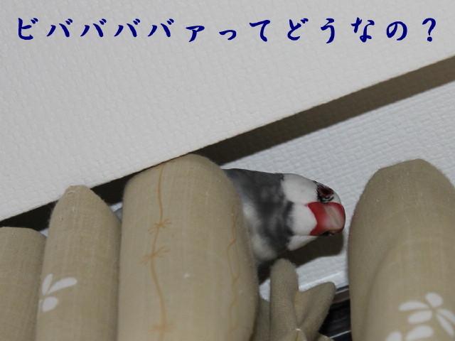 c0365734_20113497.jpg