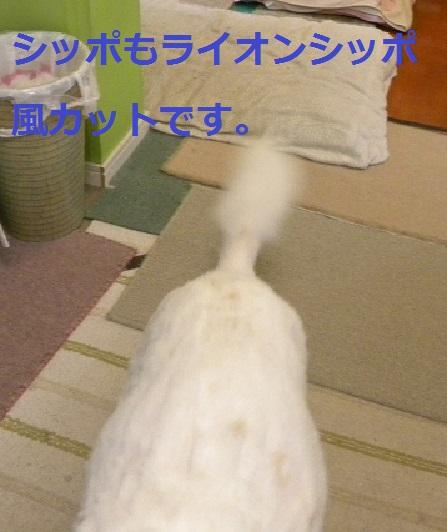 b0201756_22524312.jpg