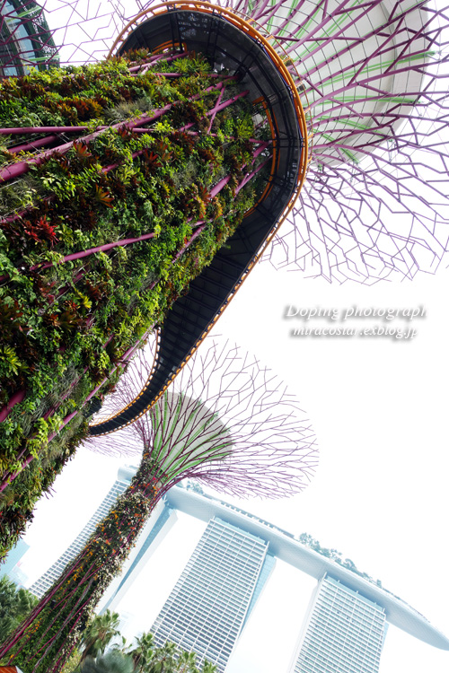 Gardens by the Bay _e0140159_2274644.jpg