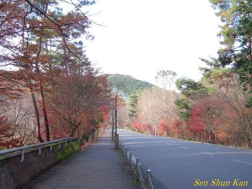 京都名残の紅葉 2015年12月13日_a0164068_1448529.jpg