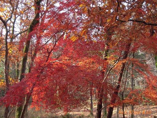 京都名残の紅葉 2015年12月13日_a0164068_14501631.jpg