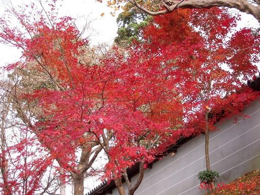 京都名残の紅葉 2015年12月13日_a0164068_14511990.jpg