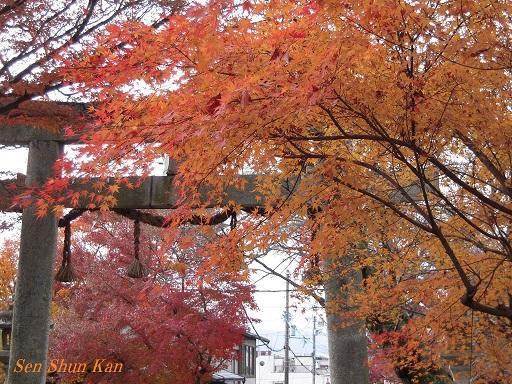 京都名残の紅葉 2015年12月13日_a0164068_14514722.jpg