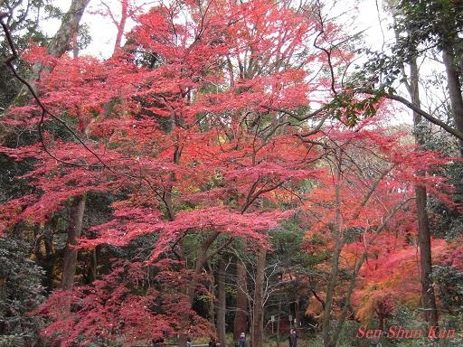 京都名残の紅葉 2015年12月13日_a0164068_14534871.jpg
