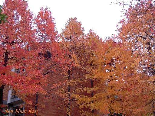 京都名残の紅葉 2015年12月13日_a0164068_1453849.jpg