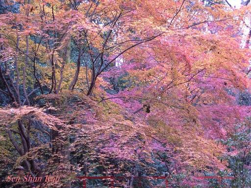 京都名残の紅葉 2015年12月13日_a0164068_14545382.jpg