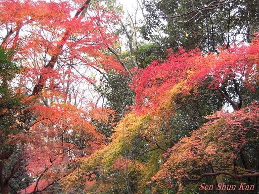 京都名残の紅葉 2015年12月13日_a0164068_1454983.jpg