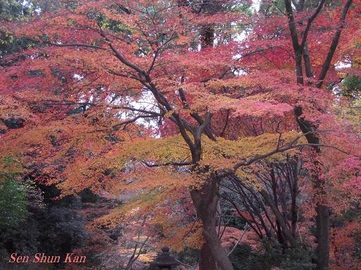 京都名残の紅葉 2015年12月13日_a0164068_14551720.jpg