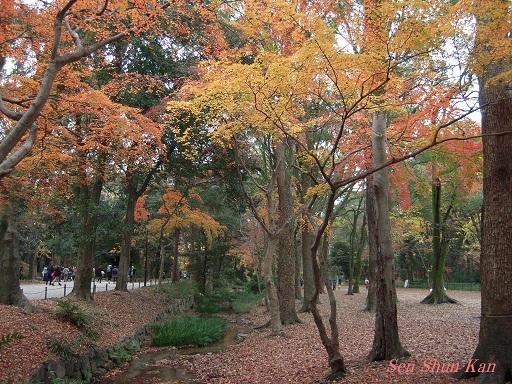 京都名残の紅葉 2015年12月13日_a0164068_14553712.jpg