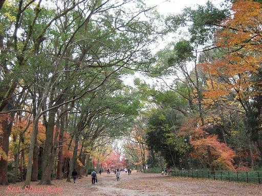 京都名残の紅葉 2015年12月13日_a0164068_14555575.jpg