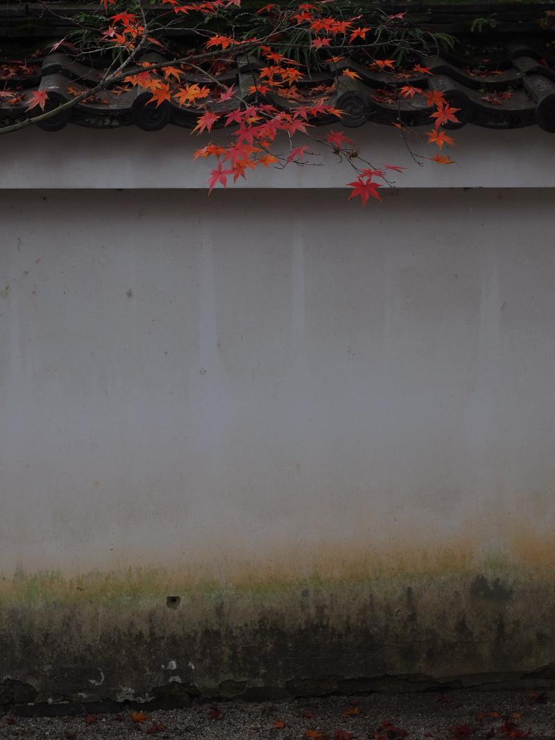 紅葉2015   一休寺                     _f0021869_151390.jpg