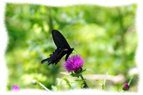蝶のいる風景blog