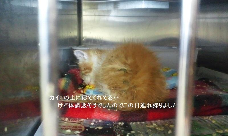 【移動先募集】センター(本所)収容猫(12/12訪問) _f0242002_1416111.jpg