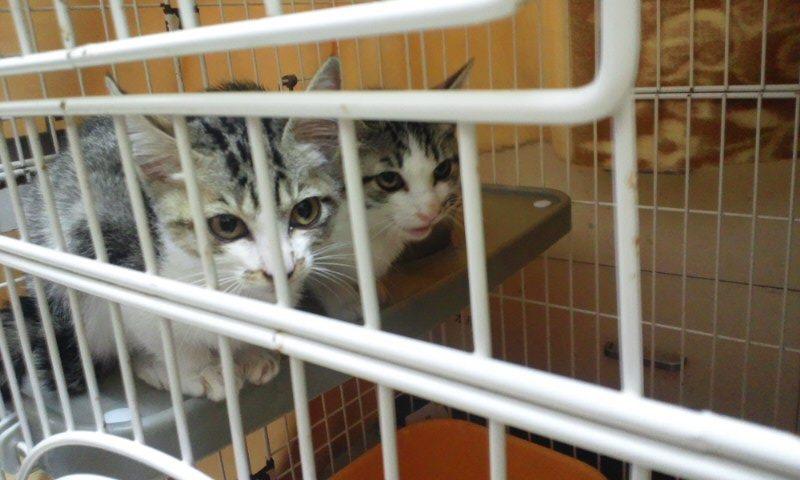 【移動先募集】センター(本所)収容猫(12/12訪問) _f0242002_23302037.jpg