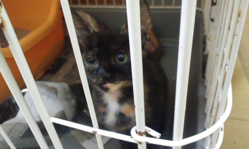 【移動先募集】センター(本所)収容猫(12/12訪問) _f0242002_23303673.jpg