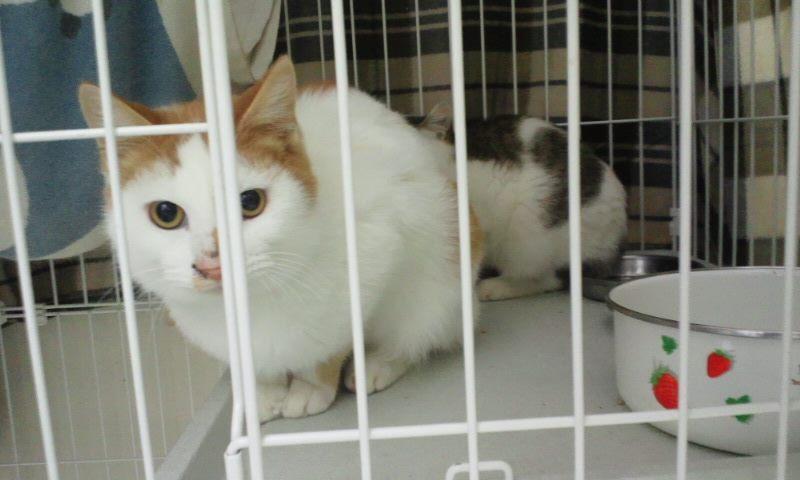 【移動先募集】センター(本所)収容猫(12/12訪問) _f0242002_2330461.jpg