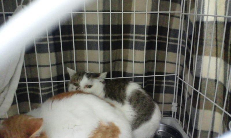 【移動先募集】センター(本所)収容猫(12/12訪問) _f0242002_23305269.jpg