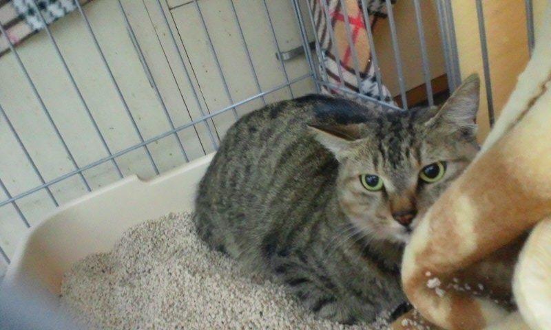 【移動先募集】センター(本所)収容猫(12/12訪問) _f0242002_23312151.jpg