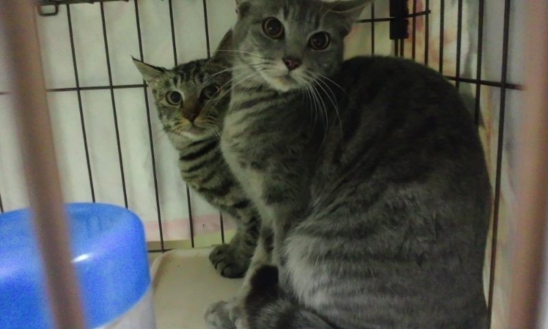 【移動先募集】センター(本所)収容猫(12/12訪問) _f0242002_23313435.jpg