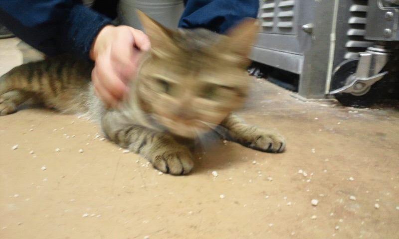 【移動先募集】センター(本所)収容猫(12/12訪問) _f0242002_23322768.jpg