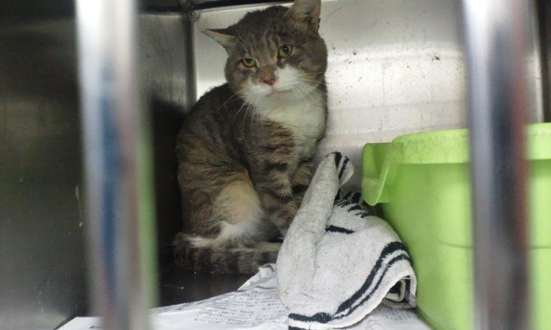 【移動先募集】センター(本所)収容猫(12/12訪問) _f0242002_23325253.jpg