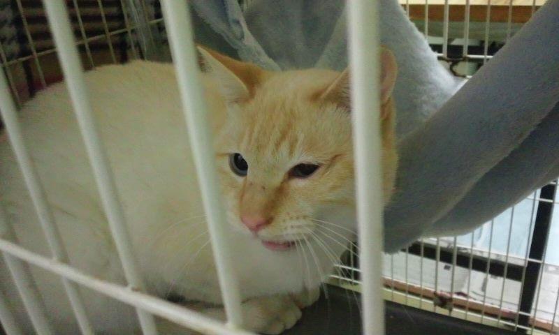 【移動先募集】センター(本所)収容猫(12/12訪問) _f0242002_23334627.jpg