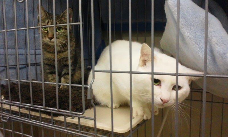 【移動先募集】センター(本所)収容猫(12/12訪問) _f0242002_23342875.jpg