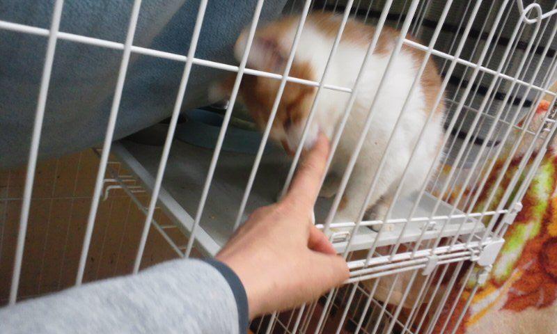【移動先募集】センター(本所)収容猫(12/12訪問) _f0242002_2334346.jpg