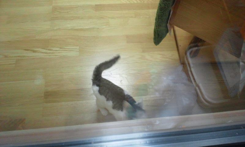 【移動先募集】センター(本所)収容猫(12/12訪問) _f0242002_23344511.jpg
