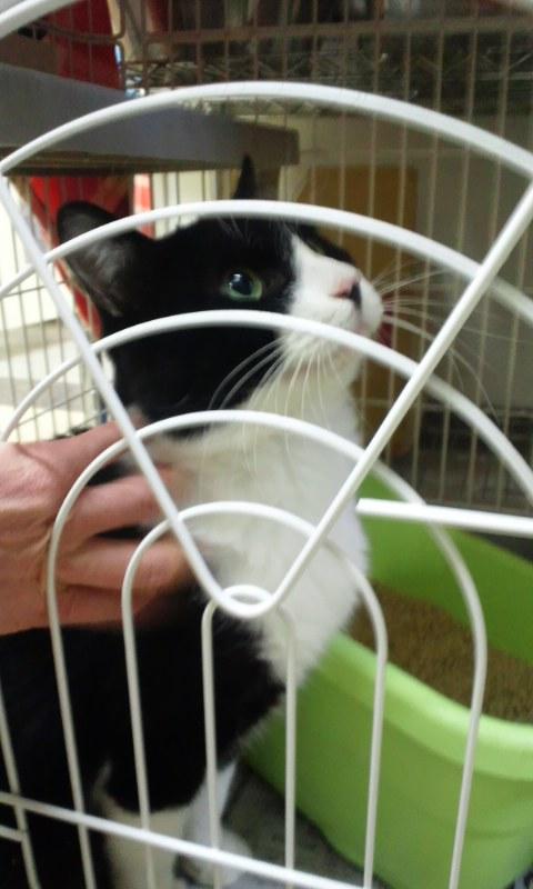 【移動先募集】センター(本所)収容猫(12/12訪問) _f0242002_23345786.jpg