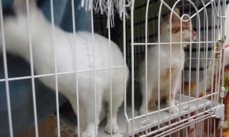 【移動先募集】センター(本所)収容猫(12/12訪問) _f0242002_23393752.jpg