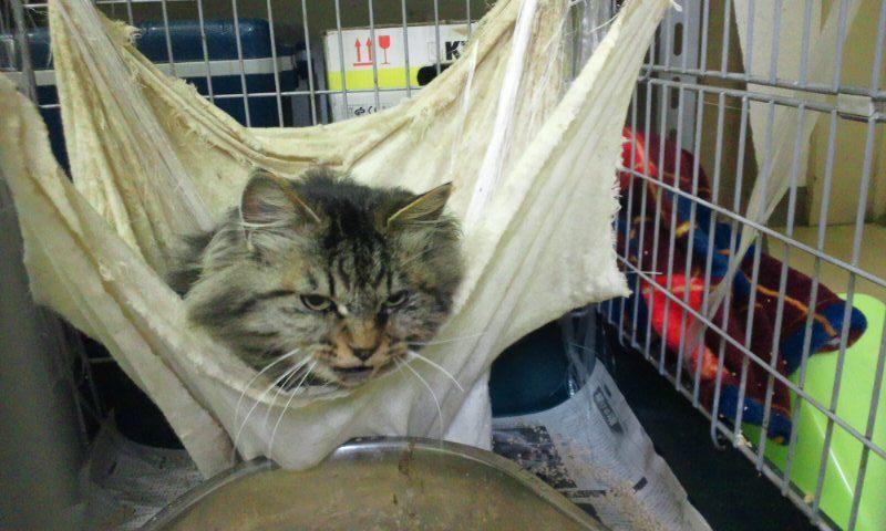 【移動先募集】センター(本所)収容猫(12/12訪問) _f0242002_23402317.jpg