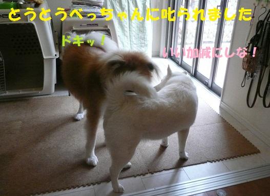 f0121712_23365623.jpg