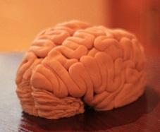 クリスマスBMJ:ヒト海綿状脳食症!?_e0156318_17331316.jpg