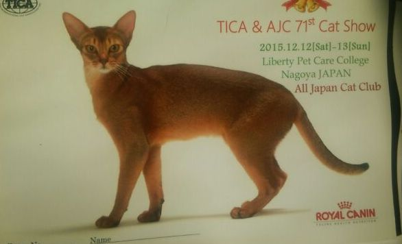 TICA&AJCキャットショーお礼_f0168339_19253884.jpg