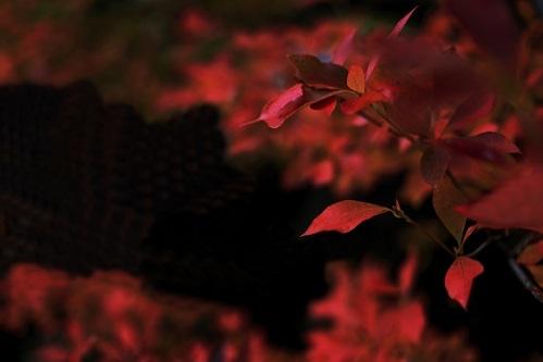 『赤と黒』_e0241944_15485035.jpg