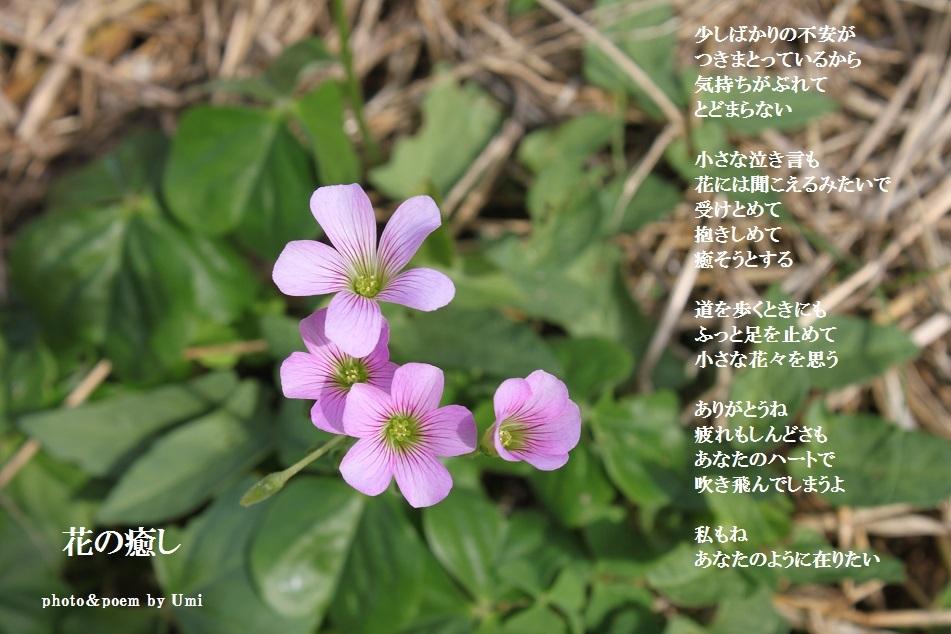 f0351844_16125247.jpg