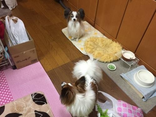 ハッピーバースデー!くりちゃん_c0335145_22292052.jpg
