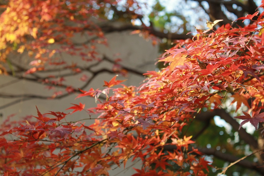 蘭香茶館の季節、_f0070743_10473133.jpg