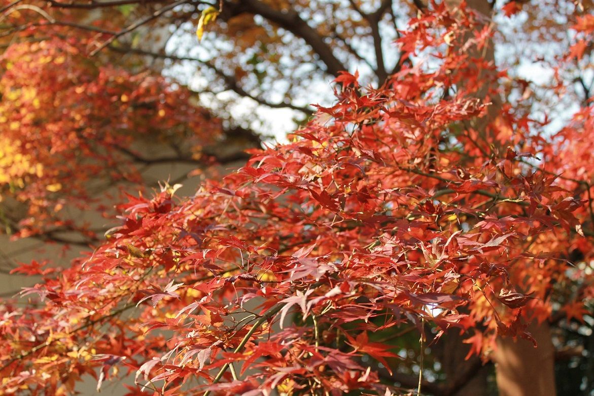 蘭香茶館の季節、_f0070743_10474163.jpg