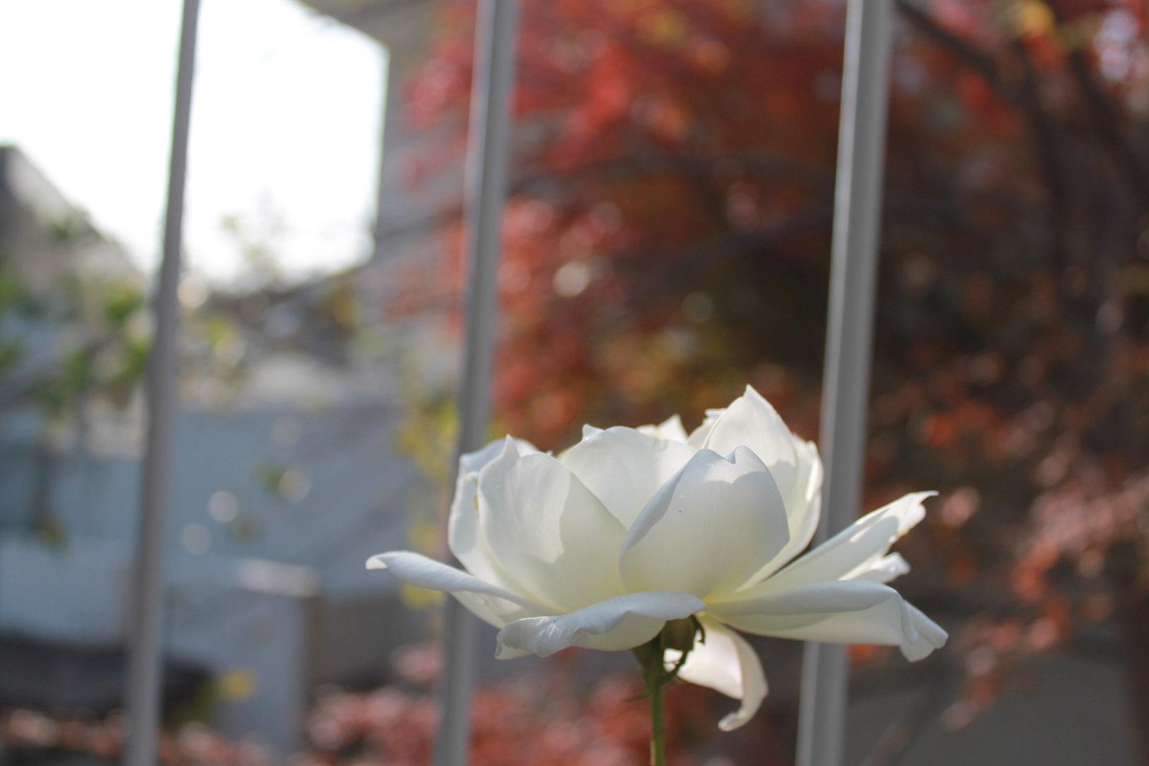蘭香茶館の季節、_f0070743_10532293.jpg