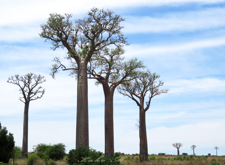 ※マダガスカルタイヨウチョウ♀ Madagascar Green Sunbird _d0013455_10331244.jpg