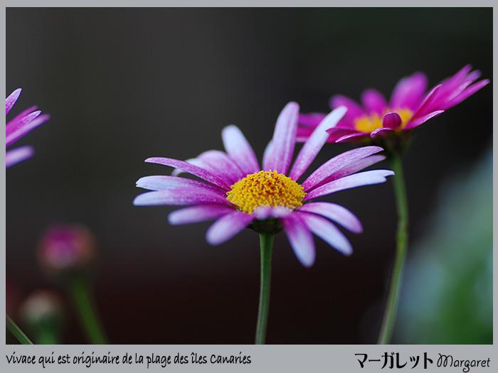 c0009981_912157.jpg