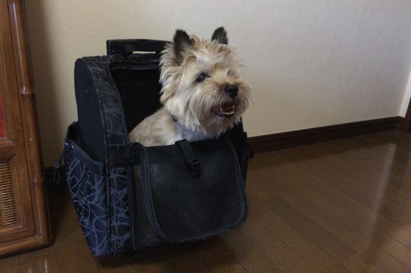 クレアWEB連載エッセイ:「松尾たいこの三拠点ミニマルライフ」犬と一緒に福井に行くときは 北陸新幹線が便利で安心_d0339885_15164135.jpg