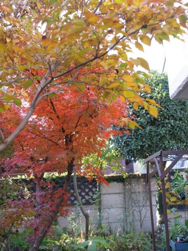 ちょっと前の庭_e0276411_2382045.jpg