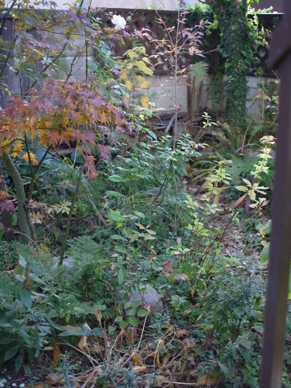 ちょっと前の庭_e0276411_2382246.jpg
