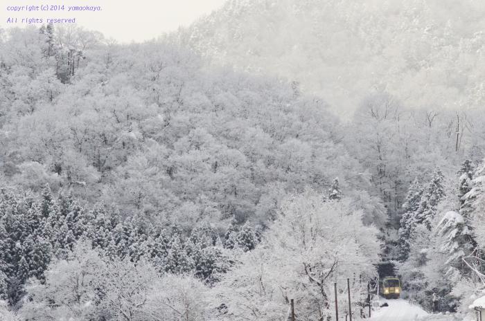 白い森の中を_d0309612_093637.jpg