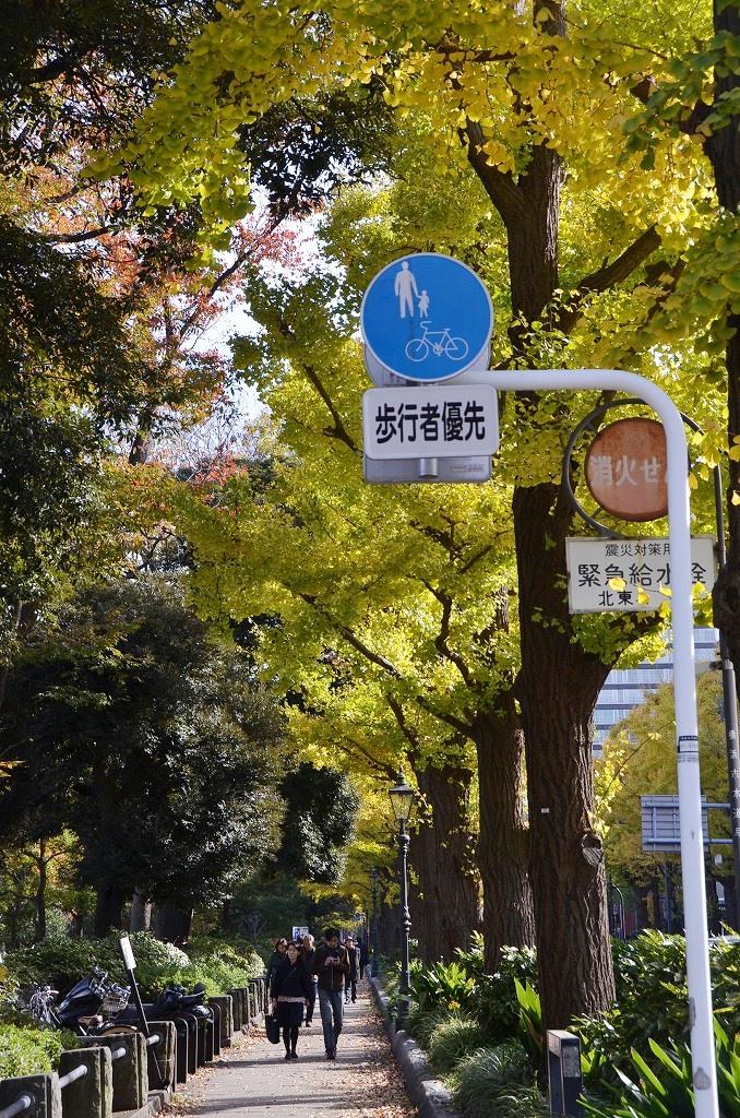 山下公園 ハッピーイエロー_d0065116_22105612.jpg